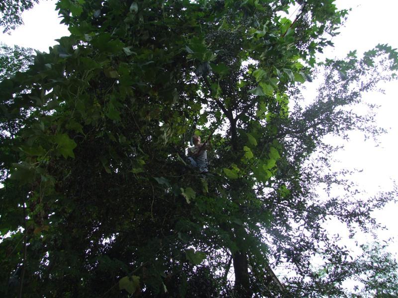 Harvesting Lufa (Medium)