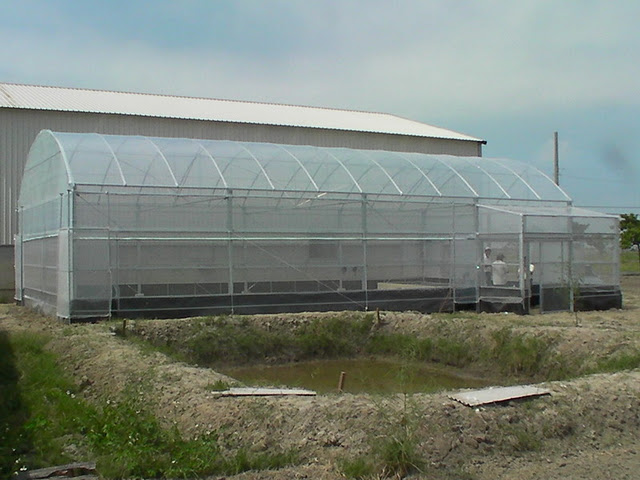 Greenhouse Appearance