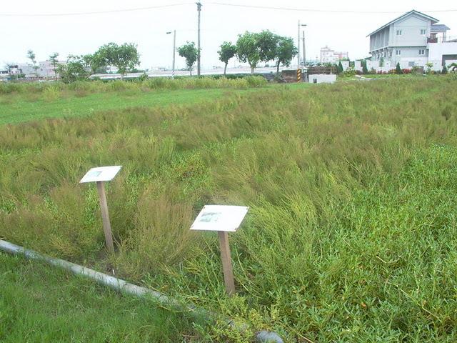 Growing areas of sludge use