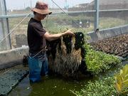 Sea Water Aquaponics 鹹水複合養殖