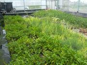 Crop area