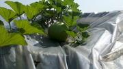 aquaponic food garden 004