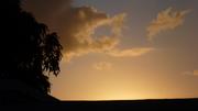 My Mango Tree at sunset