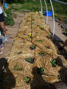 1 hour straw bed