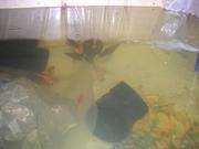 more fish in tank