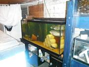main breeder tank 120 gal
