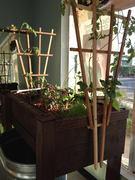 Trough & Trellis Indoor Growing