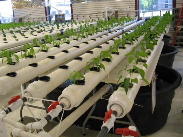 aquaponics 5-12-2012 002