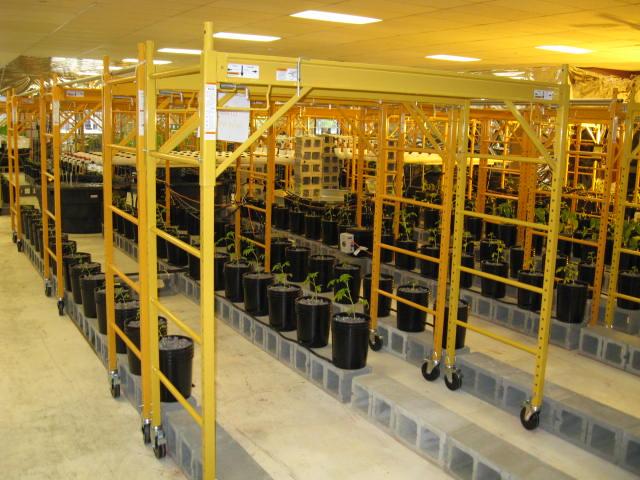 aquaponics 5-12-2012 003