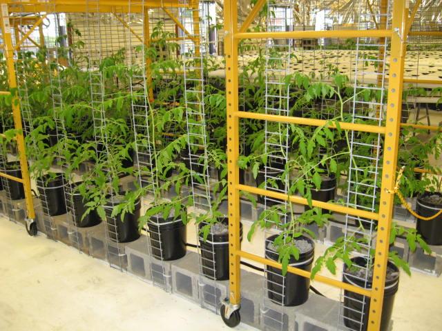aquaponics 5-12-2012 001