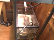 Mini aquaponics system