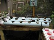 aquaponics 003