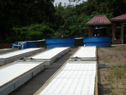 Greenwater Farms