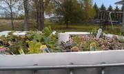My first AP garden, started 4/26/2012