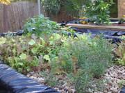 Mixed greens, basil, rosemary