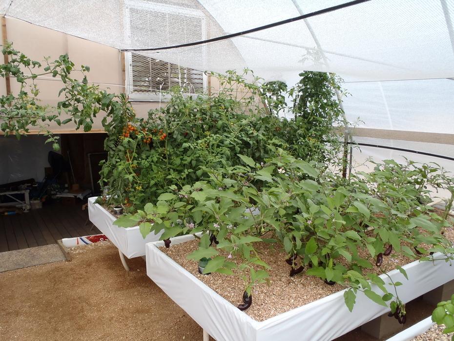 tomatoes 10-26-12