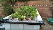 Hail in Scottsdale?