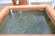 My Small Fish Tank