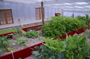 Greenhouse Overview