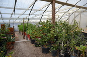 Greenhouse Overview2