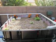 Grow bed #2