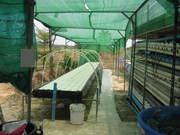 1000 litres System Ban Munag