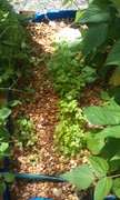 2013-04growbed4
