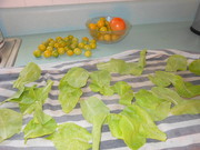 tomatoes and lettuce 4.26.13