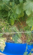 2013-05-growbed2