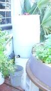 55gal Drum Compost Tea solution Generator