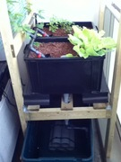 Tank Upgrade - 12th Floor Balcony Aquaponics