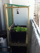 12th Floor Balcony Aquaponics