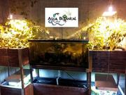 Aqua Botanical Indoor Aquaponics