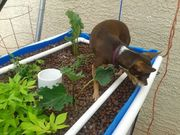 Chica in the Grow Bed
