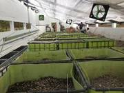 Positioning the IBS tote growbeds and filling with rock media