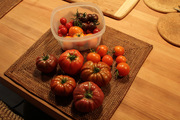 Another weekly tomato harvest