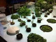 Seeding table