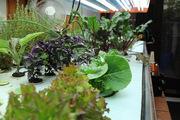 Seeding table x2