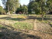 Veggie Garden