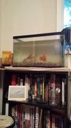 The fish tank!