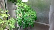 Planter26