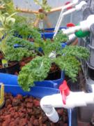 Water-Efficient-Gardens
