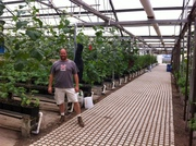 Jon Parr in front of his 18,000 tomato plants