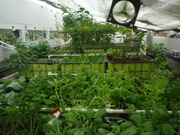 Growbeds in our system in Honduras