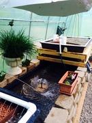 Greenhouse 56