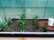 Greenhouse 58