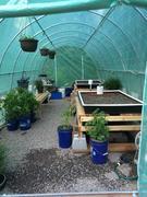 Greenhouse 51