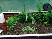 Greenhouse 59