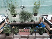 Greenhouse 62
