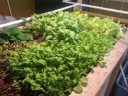 growbed7-14 (3)